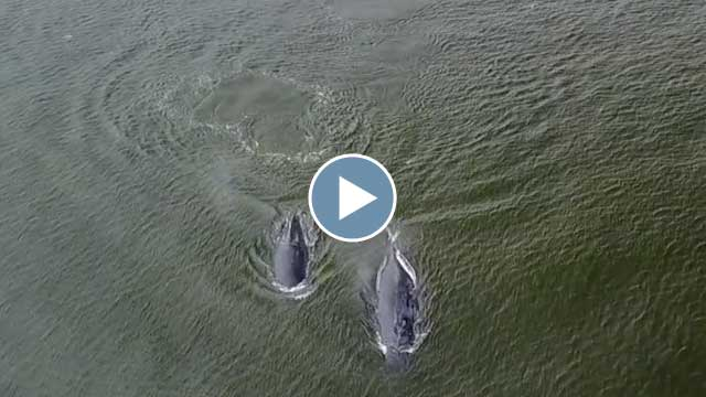 Flying Over Humpbacks – August 2017