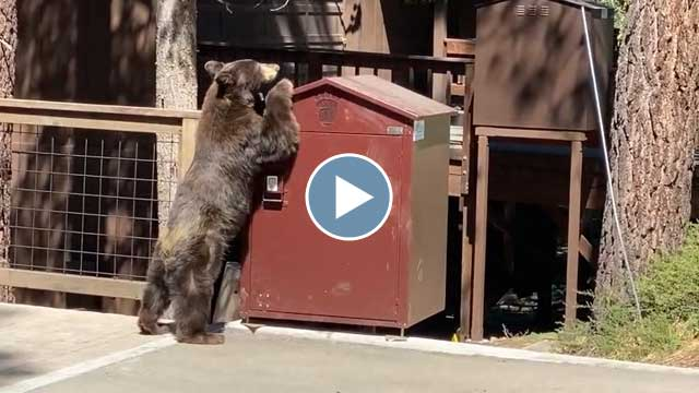 Bear Inspection – July 2020